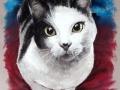 portret na zamowienie kolorowy pastelami kota kotka